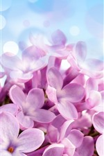 Preview iPhone wallpaper Pink lilac flowers close-up, petals, light circles