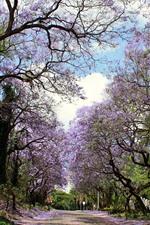 Aperçu iPhone fond d'écranRoute, arbres, fleurs roses fleurissent, printemps