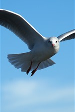 Preview iPhone wallpaper Seagull flying, blue sky, wings, beak