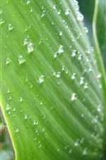 Preview iPhone wallpaper Some green leaves, surface, water droplets, dew