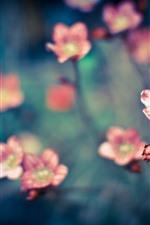 Algumas pequenas flores rosa, nebulosas