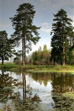 Some trees, lake, water reflection, nature scenery
