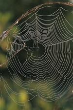 Preview iPhone wallpaper Spider web, grass