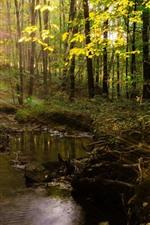 Summer, trees, sun rays, creek, forest