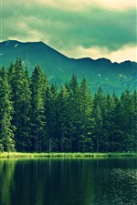 木、山、湖、緑、夕暮れ