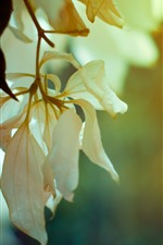 Preview iPhone wallpaper Twigs, white flower petals
