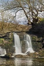 iPhone壁紙のプレビュー 滝、木、石、自然