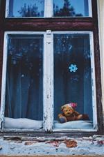 Window, wall, teddy bear
