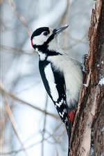 Preview iPhone wallpaper Woodpecker, tree, snow, winter