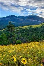 Arizona, valley, mountains, flowers, sunrise, USA