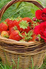 Basket, red roses, strawberry
