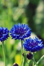 iPhone壁紙のプレビュー 青い花、茎、緑の背景