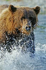 Preview iPhone wallpaper Brown bear walk in the water, water splash