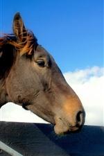Cavalo marrom, cabeça, cerca, céu azul