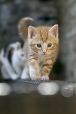 Preview iPhone wallpaper Cats walking, front view, bricks, wall