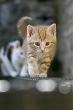 歩く猫、正面図、レンガ、壁