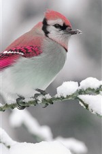 Preview iPhone wallpaper Cute bird, pink feather, twigs, snow, winter