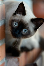 Preview iPhone wallpaper Cute cat look, wall, bricks