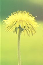 Preview iPhone wallpaper Dandelion, yellow flower, green background