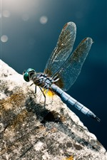 Preview iPhone wallpaper Dragonfly close-up, wings, stone, sunshine