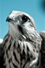Preview iPhone wallpaper Eagle, beak, eyes, wings, look