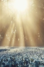 Preview iPhone wallpaper Grass, frost, trees, sun rays, winter