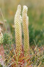 Preview iPhone wallpaper Grass macro photography, hazy