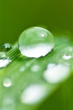 Preview iPhone wallpaper Green grass leaf, water droplets, dew