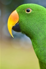 Green parrot, beak, look