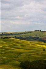 預覽iPhone桌布 意大利,蒙塔爾奇諾,托斯卡納,綠色的田野,丘陵,樹木,鄉村