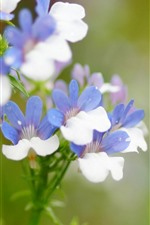 Preview iPhone wallpaper Little flowers, blue white petals