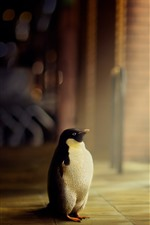 Preview iPhone wallpaper Lonely penguin, look, window, light rays