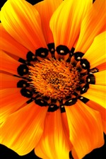 Preview iPhone wallpaper Orange flower macro photography, petals, black background
