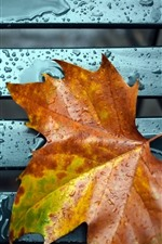 Preview iPhone wallpaper Orange maple leaf, water droplets, bench