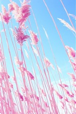 Preview iPhone wallpaper Pink reeds, sky