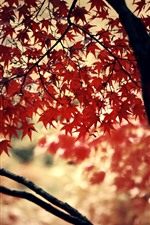 Preview iPhone wallpaper Red maple leaves, trees, autumn, hazy