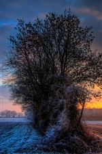Preview iPhone wallpaper Trees, frost, field, clouds, winter, sunset