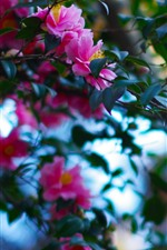 Preview iPhone wallpaper Twigs, pink flowers bloom, green leaves, park