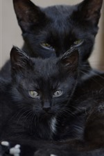 Preview iPhone wallpaper Two black cats