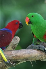 Preview iPhone wallpaper Two parrots, red and green