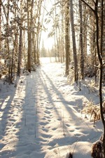 Preview iPhone wallpaper Winter, snow, trees, forest, sun rays, shadow