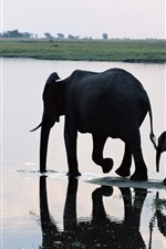 Preview iPhone wallpaper two elephants, family, river