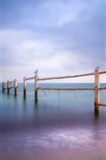 Mar Báltico, gaivotas, cerca, praia, crepúsculo