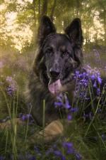Cachorro preto, flores, árvores, sol