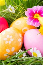 Colorful Easter eggs, flowers, grass