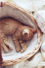 Preview iPhone wallpaper Cute kitten sleeping in basket, white sweater