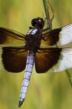 Preview iPhone wallpaper Dragonfly, wings, insect close-up, grass