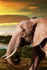 Preview iPhone wallpaper Elephant, Africa, dusk