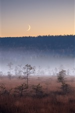 Preview iPhone wallpaper Forest, trees, grass, fog, autumn, moon