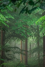 Preview iPhone wallpaper Germany, trees, forest, green leaves, fog
